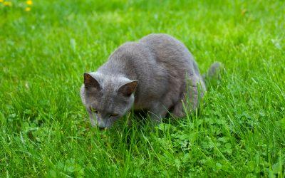 Koliko mačka može bez hrane